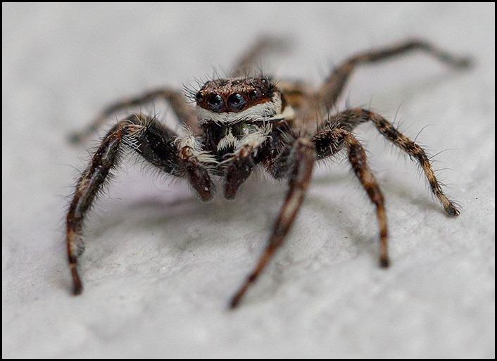 spiderish